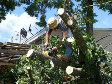 Tree Removal Manassas